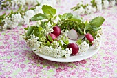 Radishes in a wreath of spiraea