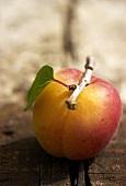 Eine Aprikose mit Stiel und Blatt