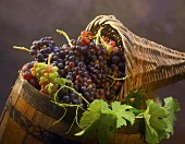 Grapes in a cornucopia