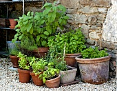 Pots of herbs in a garden