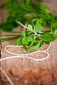 Fresh herbs and kitchen twine