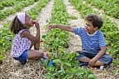 Zwei Kinder essen Erdbeeren auf dem Erdbeerfeld