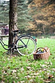 A bicycle leaning against a tree with a picnic basket in front of it on a field in qutumn