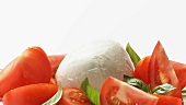 Tomaten mit Mozzarella und Basilikum