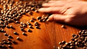 Spreading coffee beans out on wooden background