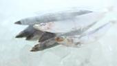Sich drehende gefrorene Sardinen