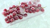 Frozen redcurrants on ice