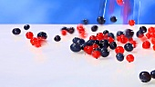 Redcurrants and blueberries falling onto white background