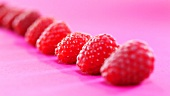 Fresh raspberries on pink background