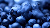 Fresh blueberries (full-frame)