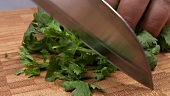 Chopping coriander