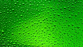 Drops of water on green background