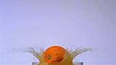 Eine Orange fällt in ein Glas Orangensaft
