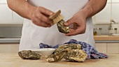 Oyster shells being cleaned with a kitchen brush