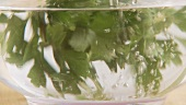 A bunch of parsley being taken out of a bowl of water