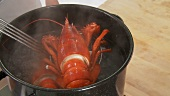 Cooked lobster being removed from the pot