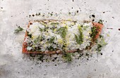 Gravlax with salt, lemon zest and dill (stop motion)