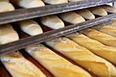 Bakery, Donostia, San Sebastian, Gipuzkoa, Euskadi, Spain