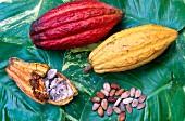 Cocoa, Saint Lucia