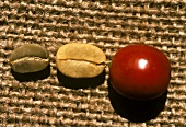 Stages of Coffee Bean; Whole Berry; Parchment and Bean