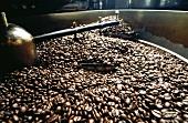 Kaffeebohnen beim Kühlen in einer Maschine