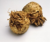 Whole Celeriac