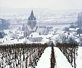 Bleak winter's day in the vineyards at Ville-Dommange, Marne, France