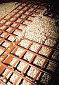 Coffee beans (raw coffee) drying