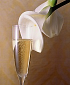 Glass of Champagne; Calla Lily