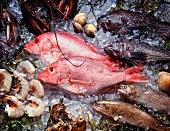 Assorted Fish and Shellfish on Ice
