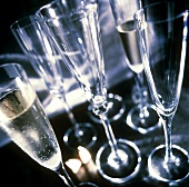 Several Champagne Flutes