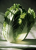 Fresh Head of Chinese Cabbage