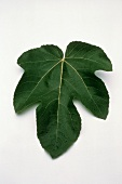 One Fig Leaf