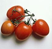 Plum Tomatoes on a Vine