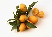 Kumquats with Branch; One Cut in Half
