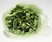 Bib Lettuce in A Stay Fresh Bag