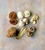 Six Types Of Mushrooms
