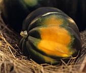 Ein einzelner Eichelkürbis (Acorn Squash) auf Heu