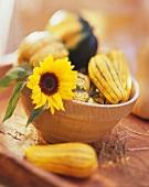 Stillleben mit verschiedenen Kürbissen & Sonnenblume in Schale