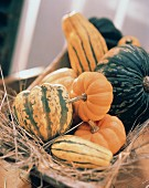 Squash and Gourds on Hay