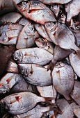 Butter Fish at a Fish Market
