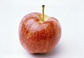 Ein Gala Apfel