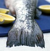 Fish Tail Close Up