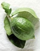 A Single Lime