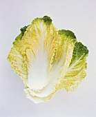 A Fresh Head of Savoy Cabbage