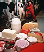 Assorted Dairy Products; Cows