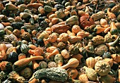 Assorted Types of Gourds