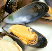 Opened Mussel