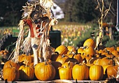 Scarecrow and Pumpkins at a Farm Stand