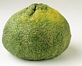 Whole Ugli Fruit